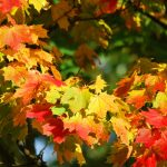 The Best New Jersey Spots for Festive Fall Foliage {Get Your Camera Ready!}