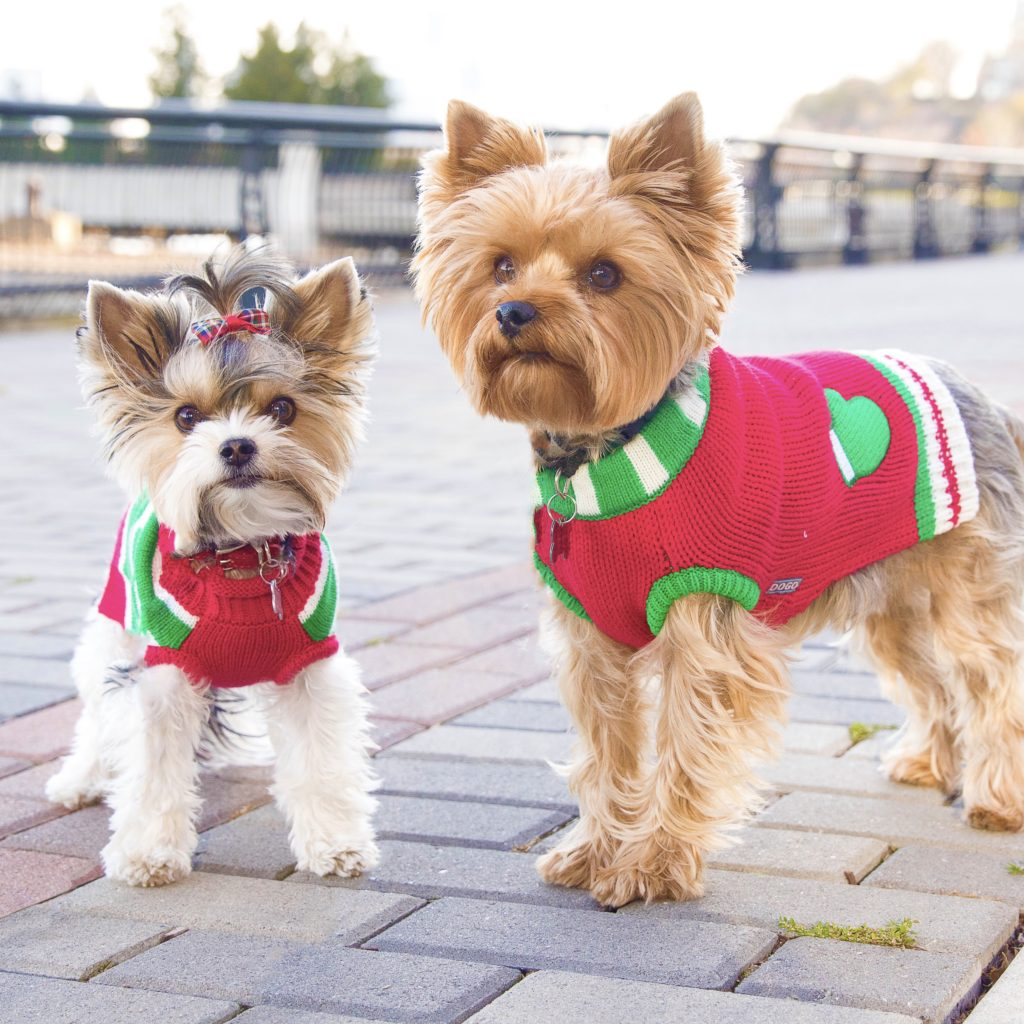dogs-wearing-holiday-outfits